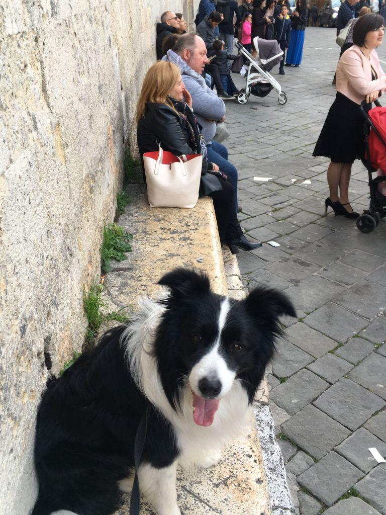włochy z psem siena