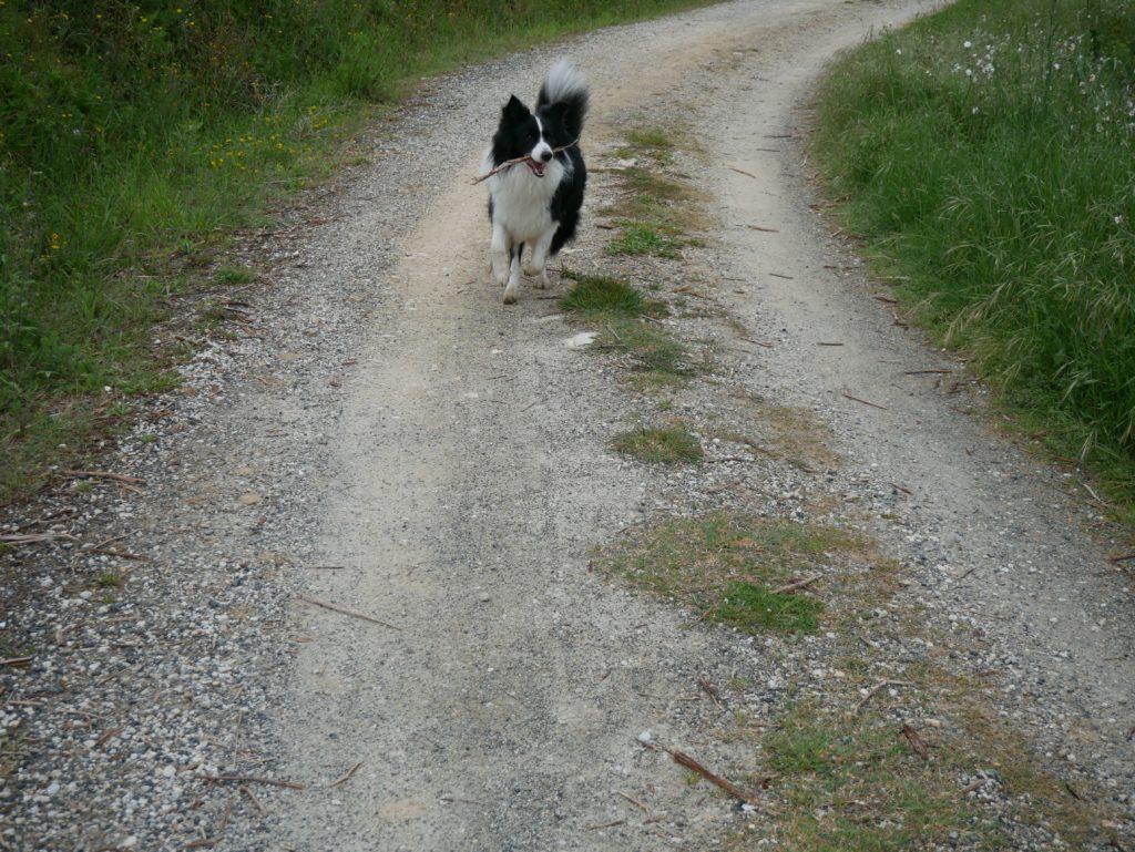 włochy z psem. via francigena